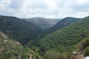 Local vistas