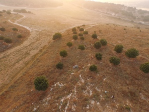 Aerial shot of groups walking transects at sunrise.